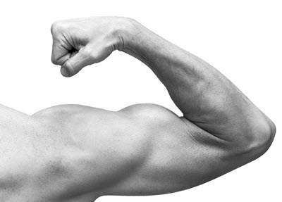 Male arm flexing, posterior view